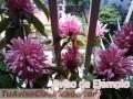 Plantas y semillas de Flores de San Juan
